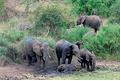 Фото №5 - Слонопотамия. 13 фотоисторий из жизни слонов