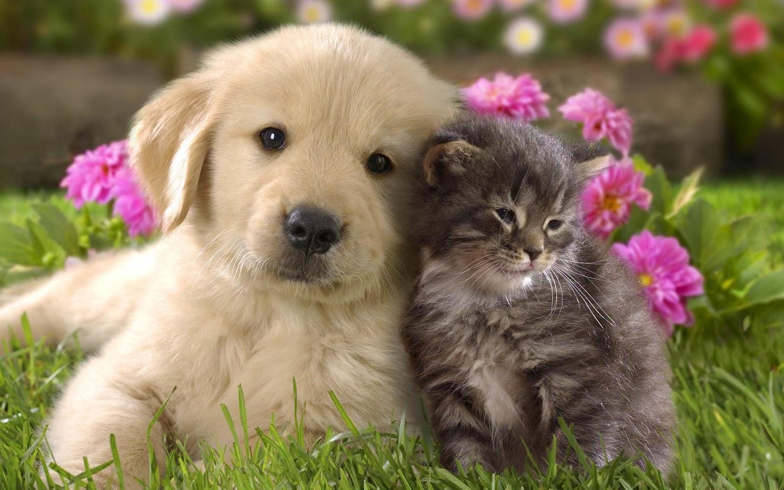 Картинка собаки и кошки
