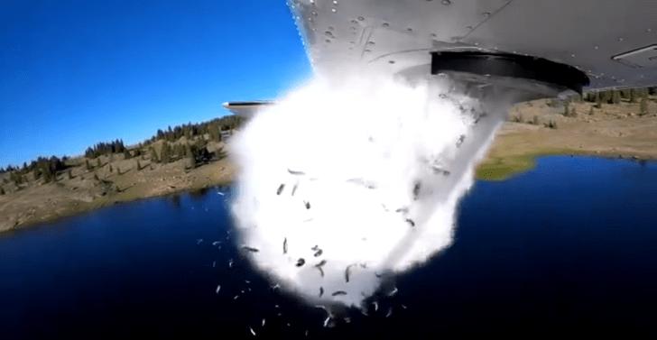 Фото №1 - Американские экологи бомбят озера рыбой (видео)