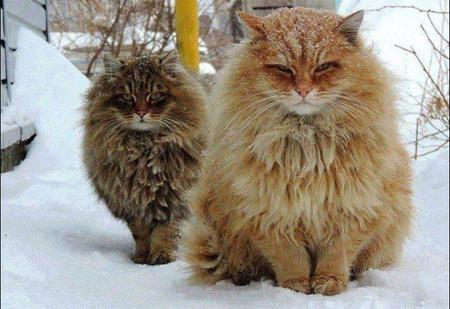 Сибирская деревня с котами прославилась на весь мир!