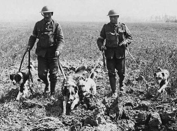 Фото №1 - Заблудившаяся собака и еще 4 странные причины, из-за которых начинались войны