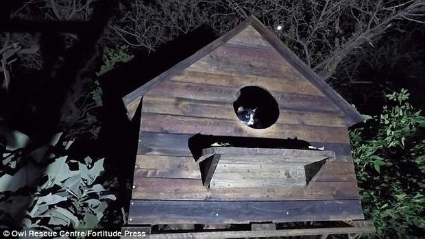 Фото №2 - Наглый кот разграбил кормушку спасенных южноафриканских сипух (ВИДЕО)