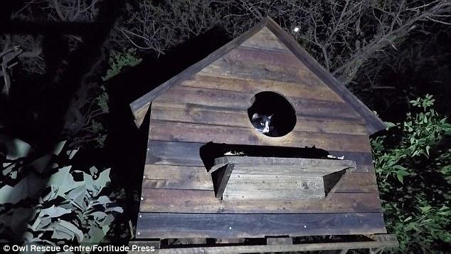 Наглый кот разграбил кормушку спасенных южноафриканских сипух (ВИДЕО)