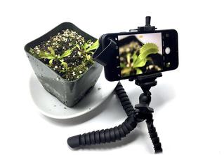 Как заснять рост растения на видео