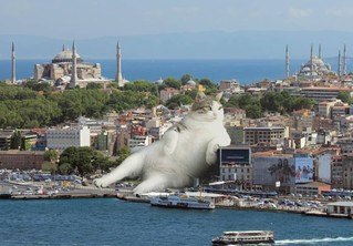 Кот в большом городе — новый беспроигрышный жанр изобразительного искусства!