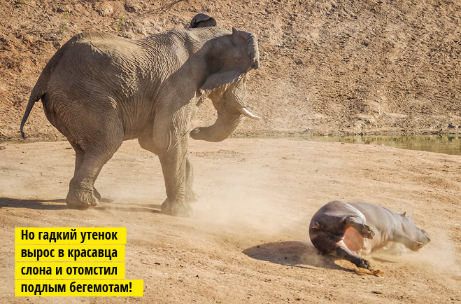 Фото №4 - Фото месяца: слоны без правил