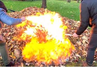 Смотри, что будет, если полить кучу листьев бензином и поджечь (видео)