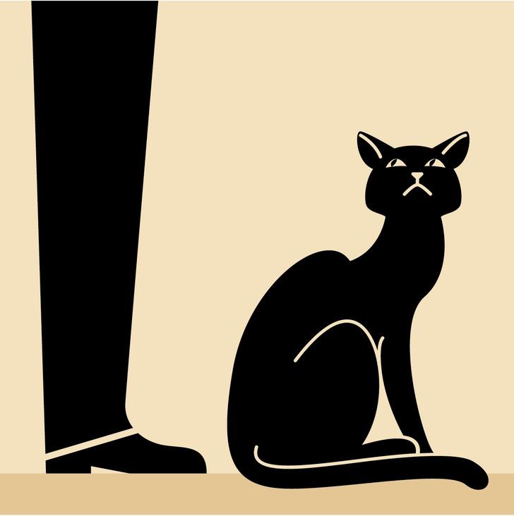 Фото №5 - Как понять язык кота: Краткий человеко-кошачий словарь