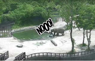 Пожалуй, лучшее видео со слонами в 2017 году!