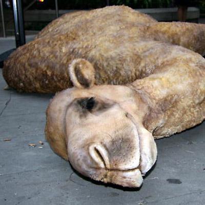 Содержимое брюха верблюда