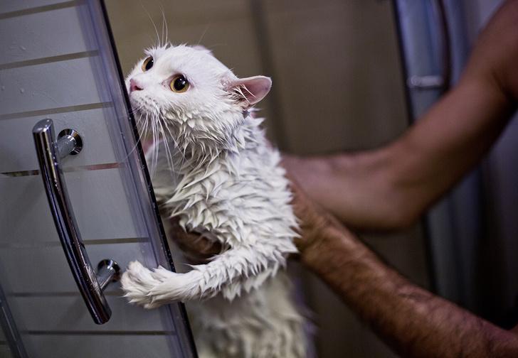 Фото №1 - Как помыть кота