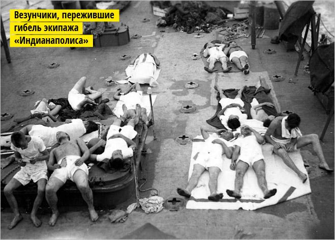 Фото №4 - Рыба-Гитлер. Исчерпывающий материал об акулах, после которого ты больше никогда не поедешь на море или океан