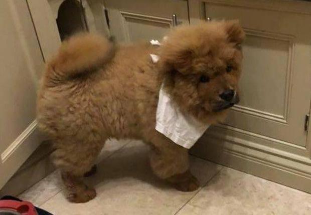 Фото №2 - В Великобритании арестовали четырехмесячного щенка, укусившего полицейского. За пса вступились тысячи человек