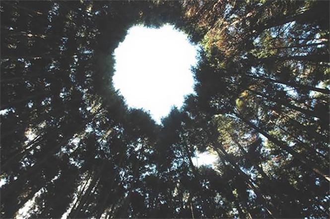Фото №5 - Круглый лес, на выращивание которого японцы потратили 50 лет