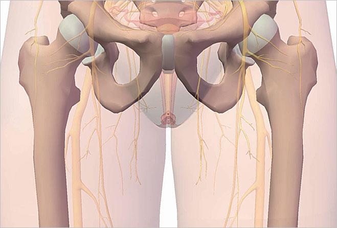 Glans clitoridis