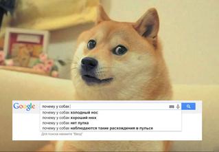 Собака от А до УУУ! Ответы на самые частые собачьи «почему»