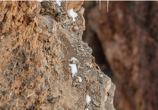 Найди снежного барса на фото: новая оптическая иллюзия