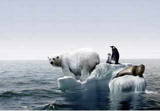 Ура! Мы не виноваты в глобальном потеплении! Продолжаем свинячить!