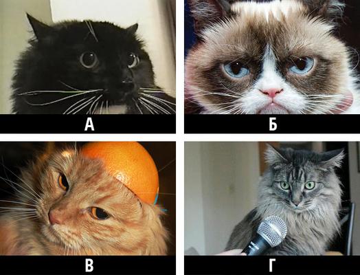 Фото №12 - Тест. Помнишь ли ты старые мемы?