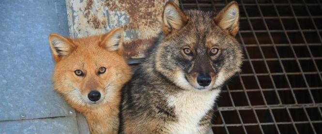 Фото №14 - 13 животных-гибридов, о существовании которых ты не подозревал
