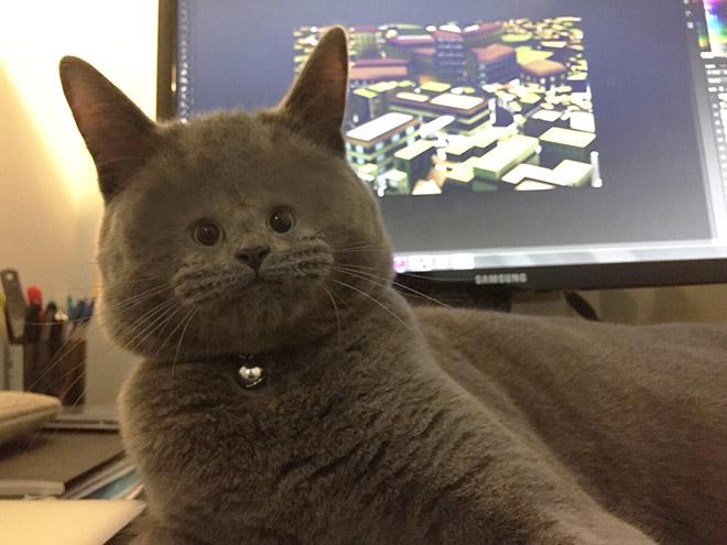 Фото №13 - Коты с крошечными мордами!