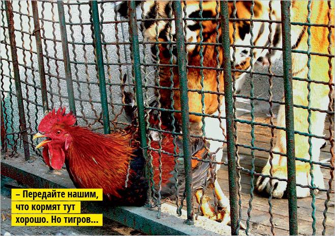 Фото №10 - Устроили из зоопарка цирк!
