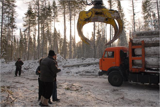 Фото №19 - Сибирская резня бензопилой