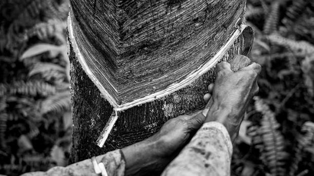 Фото №2 - Все о каучуке: увлекательный проект Pirelli об устойчивом развитии и бережном отношении