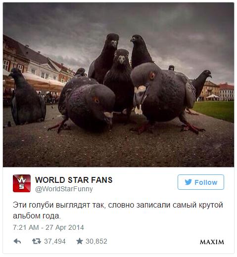 Фото №10 - 10 самых смешных твитов недели со всего света!