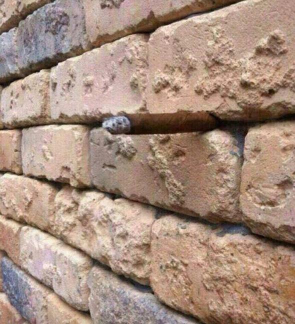 Фото №1 - В Сети набирает популярность новая оптическая иллюзия! Сможешь ли ты ее разглядеть?
