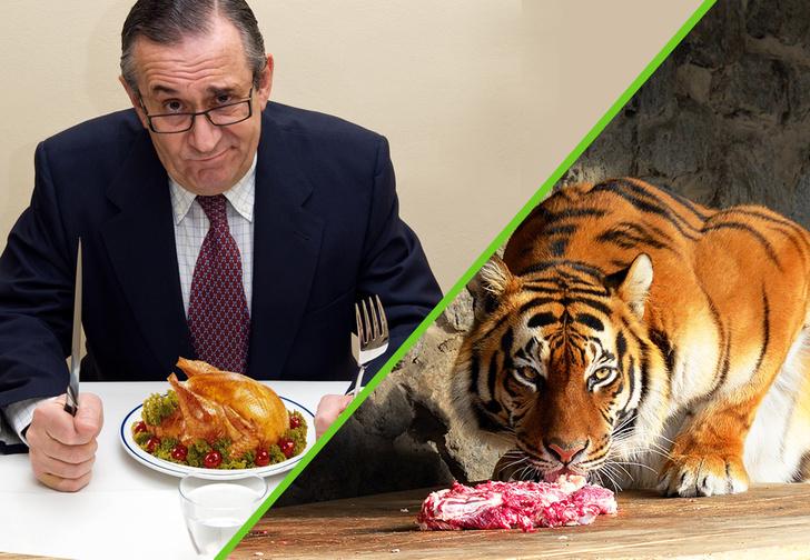 Фото №1 - Госдума против цирка: где дешевле кормят?