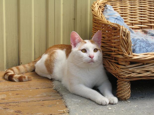 Фото №3 - Котопёс недели: возьми из приюта кота Дюшеса или собаку Розу