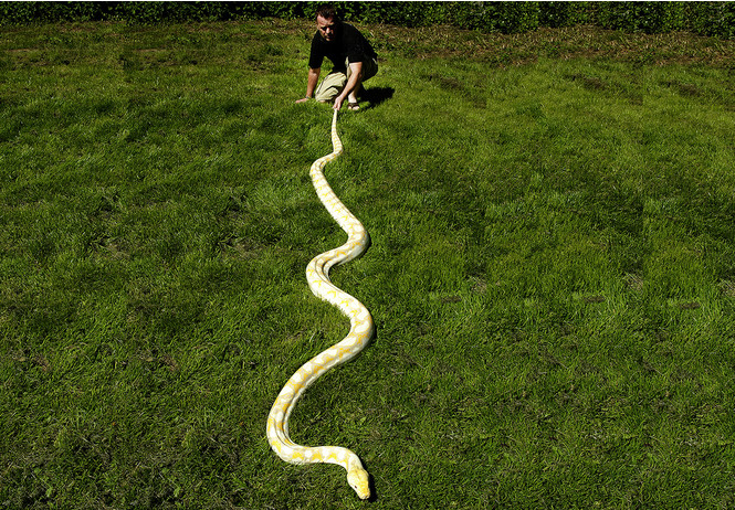 Как завести дома сторожевую змею