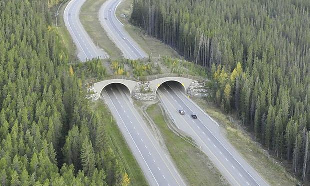 Фото №8 - 15 самых-самых мостов