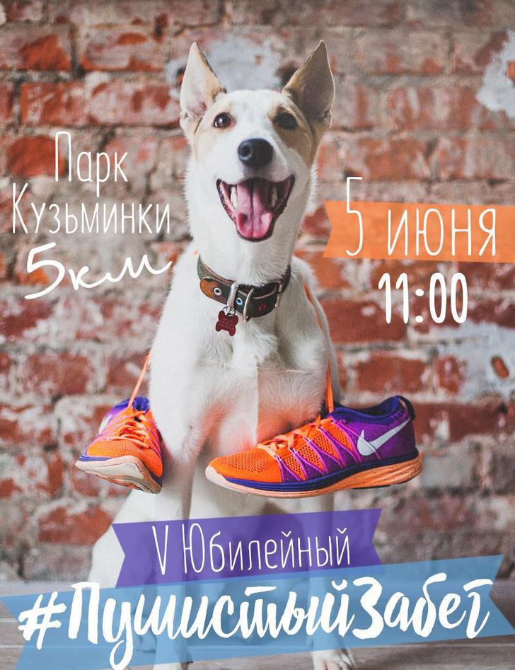 Беги, помогай, погладь собаку