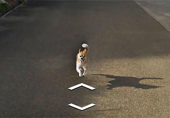 Фото №1 - Собака преследовала машину Google и настойчиво портила снимки