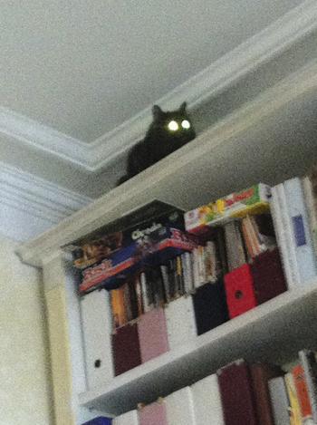 Фото №1 - Письмо редактора. Про кота