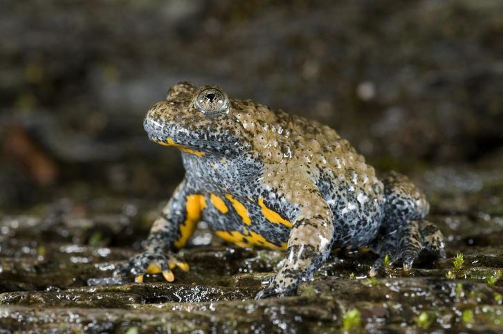 Фото №9 - 20 лучших фото жаб всех времен и народов!