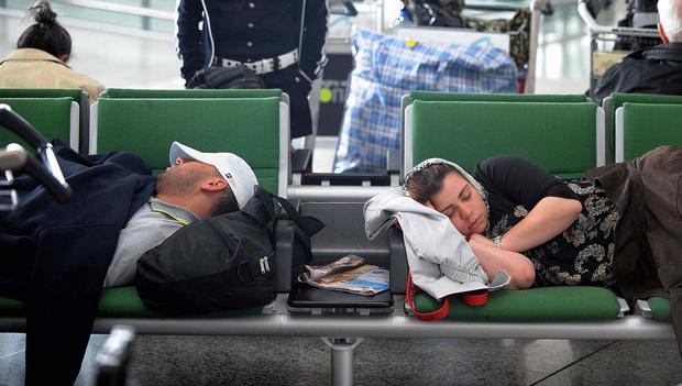 Фото №1 - В аэропортах Домодедово и Шереметьево запретили кататься на пони!