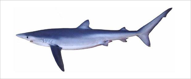 Фото №9 - Рыба-Гитлер. Исчерпывающий материал об акулах, после которого ты больше никогда не поедешь на море или океан