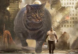 Лучшие фотожабы на кота-бодибилдера!