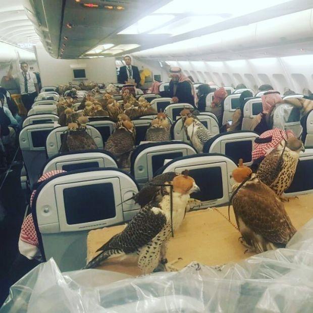 Арабский шейх арендовал самолет для 80 своих соколов!