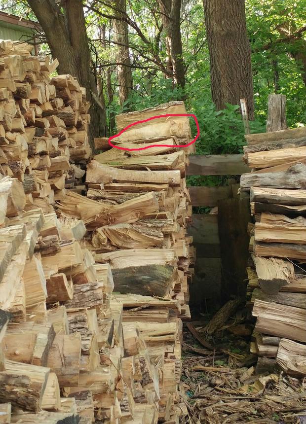 Новая оптическая иллюзия: найди кота на картинке!