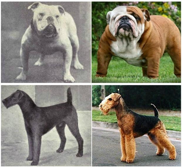 собаки порода