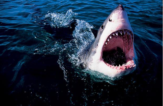 Пережить нападение акулы