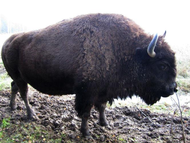 Фото №3 - 13 животных-гибридов, о существовании которых ты не подозревал