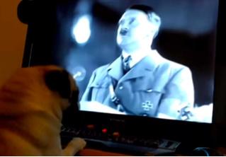 Шотландец научил мопса нацистскому приветствию и попал под суд