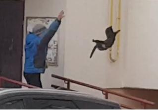 Житель Башкирии прогнал из города дикого лося, бросив в него котом (видео)