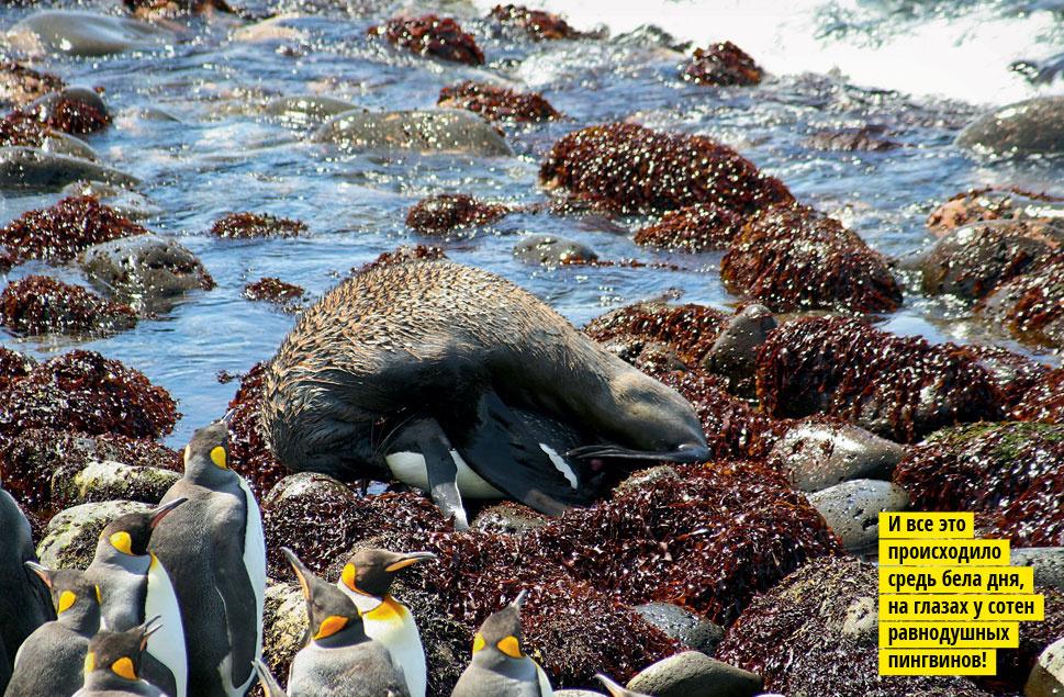 Смерть в конце тюленя