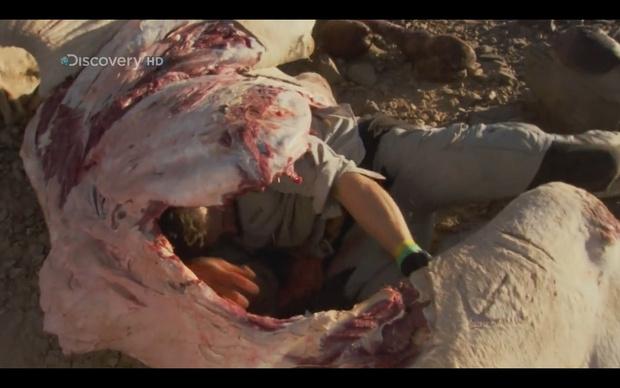 Фото №10 - 5 реальных способов выживания, которым тебя может научить фильм «Выживший»